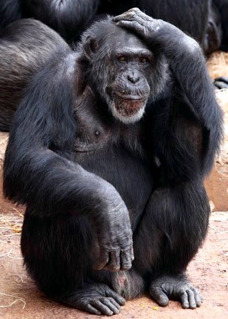 el mono perplejo